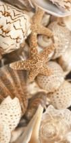 Плитка Sea Breeze Shells Е11411