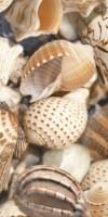 Плитка Sea Breeze Shells Е11421