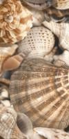 Плитка Sea Breeze Shells Е11431