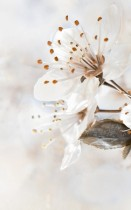 Плитка Sakura В61411